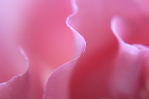 Rose Petal Edges